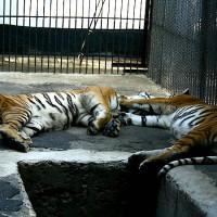 Parcul Zoo